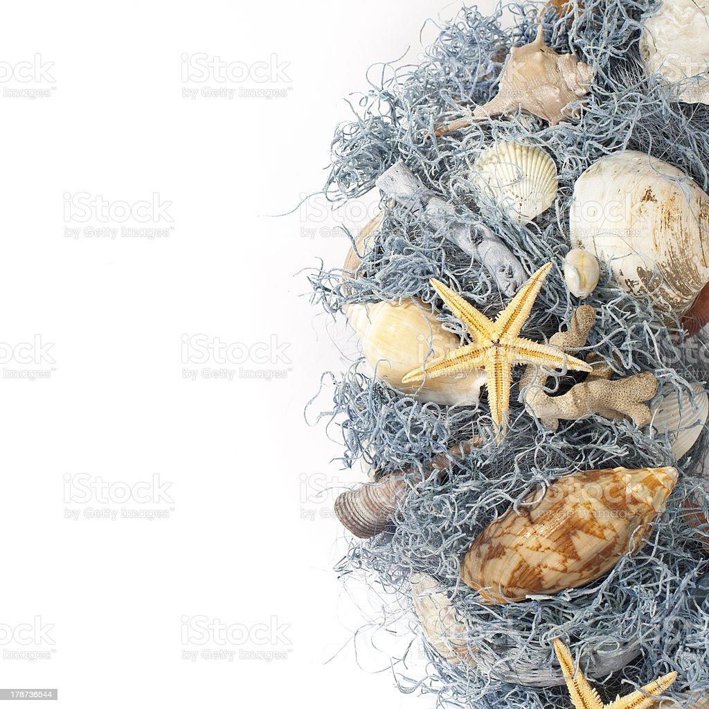 Conchas do mar foto royalty-free