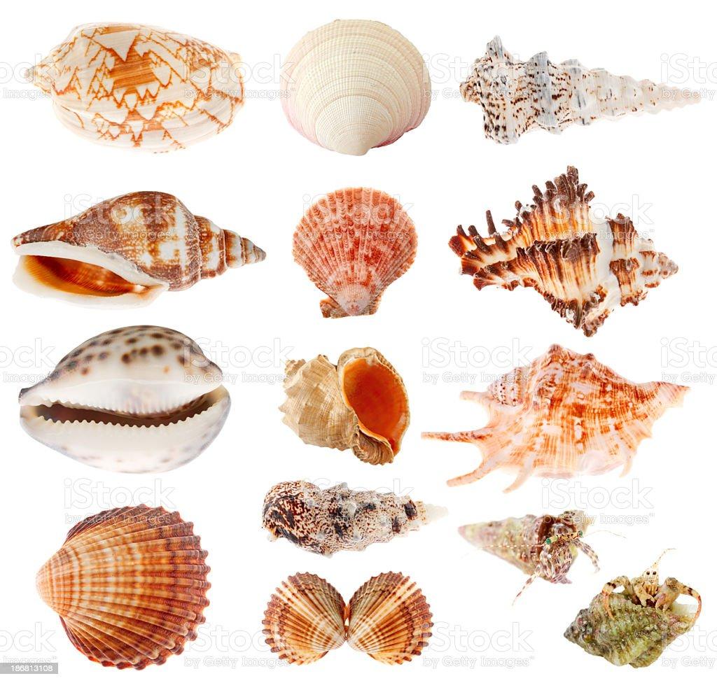 Seashells set isolated on white background stock photo