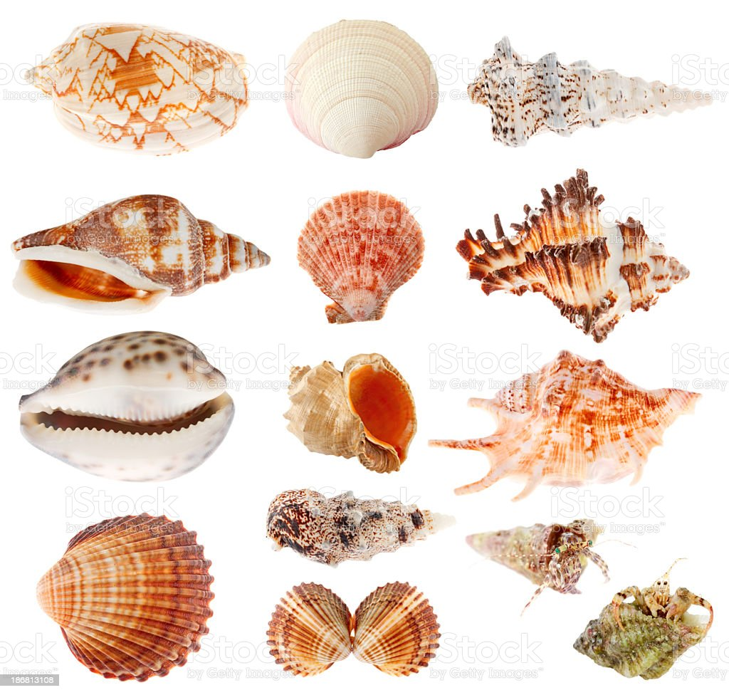 Seashells set isolated on white background stock photo