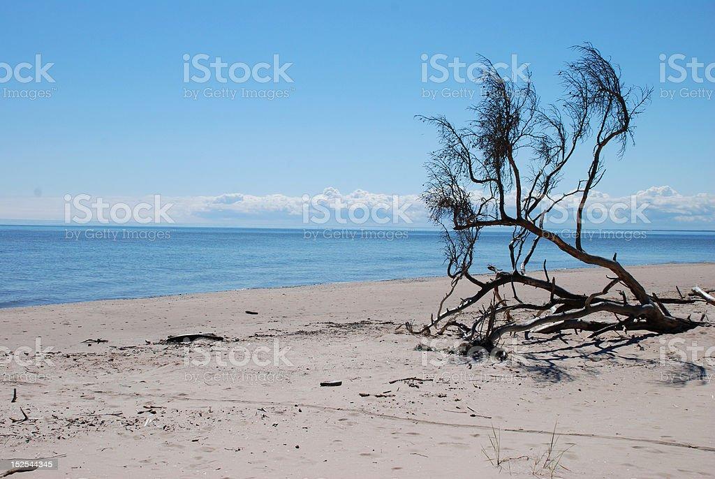 Seashore royalty-free stock photo