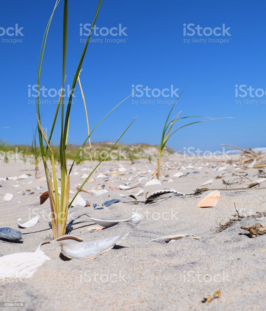 Seashore Sprouts stock photo