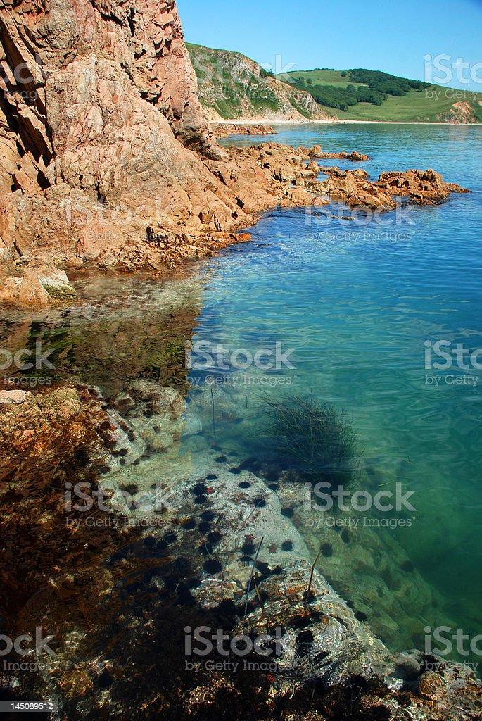 Seashore, underwater life, echinuses royalty-free stock photo