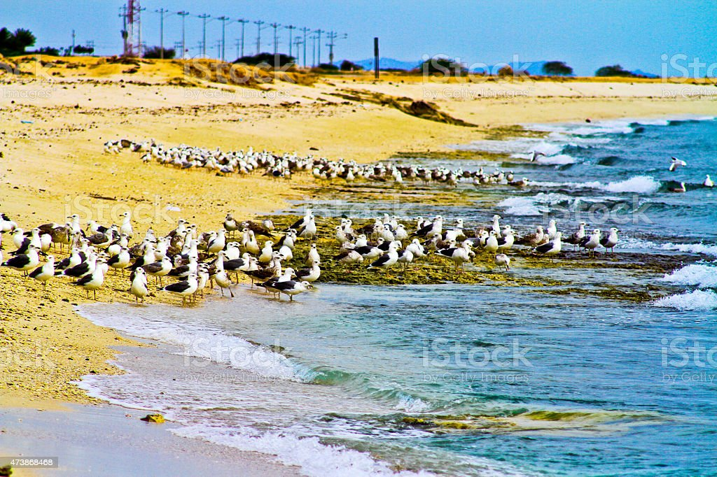 Seaside and the birds by the water royalty-free stock photo