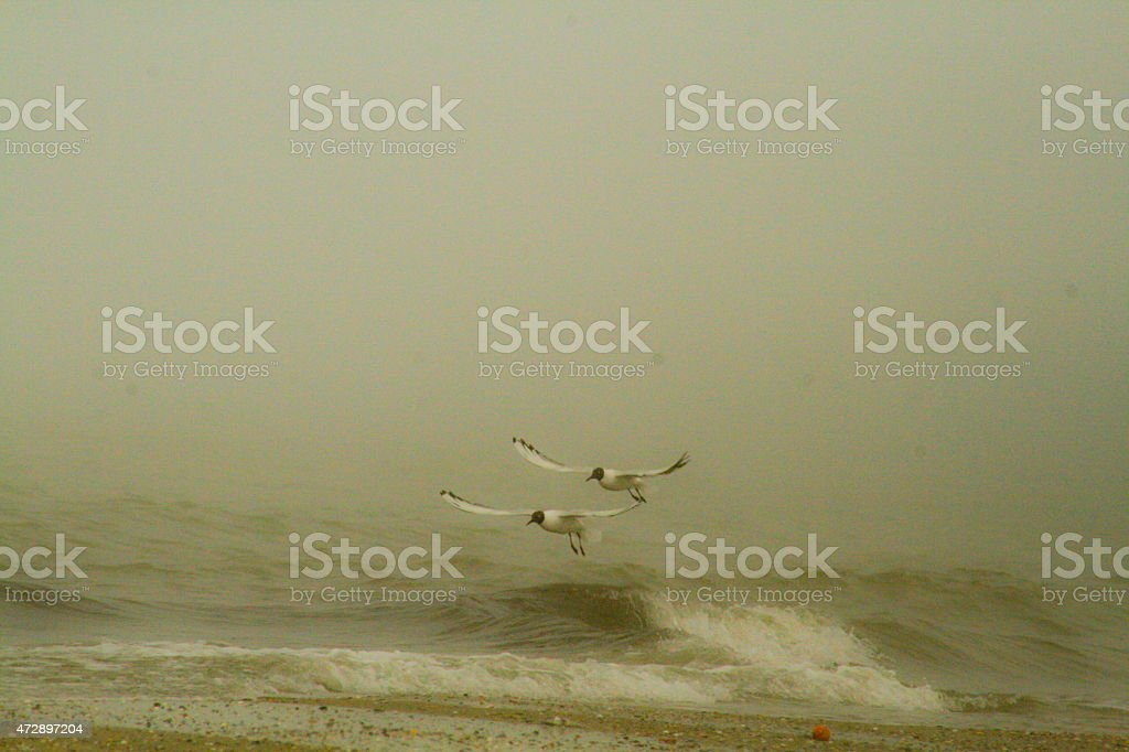 Seaside and the birds flying above the water royalty-free stock photo