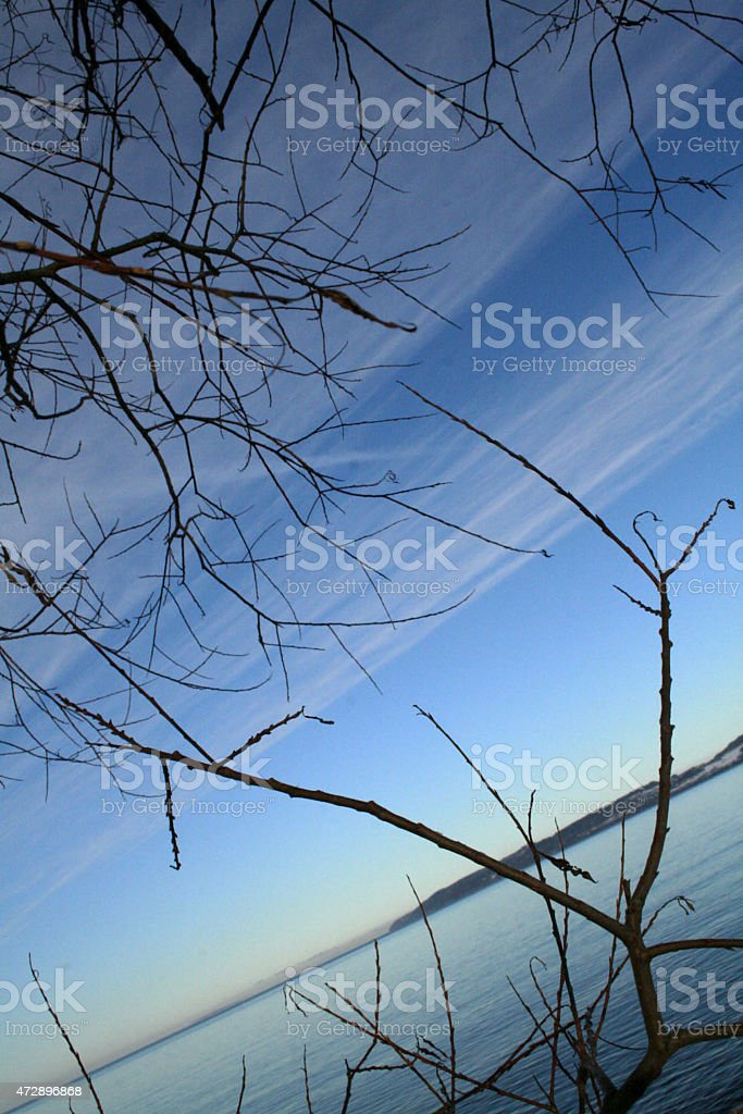 Seaside and the plants by the water royalty-free stock photo