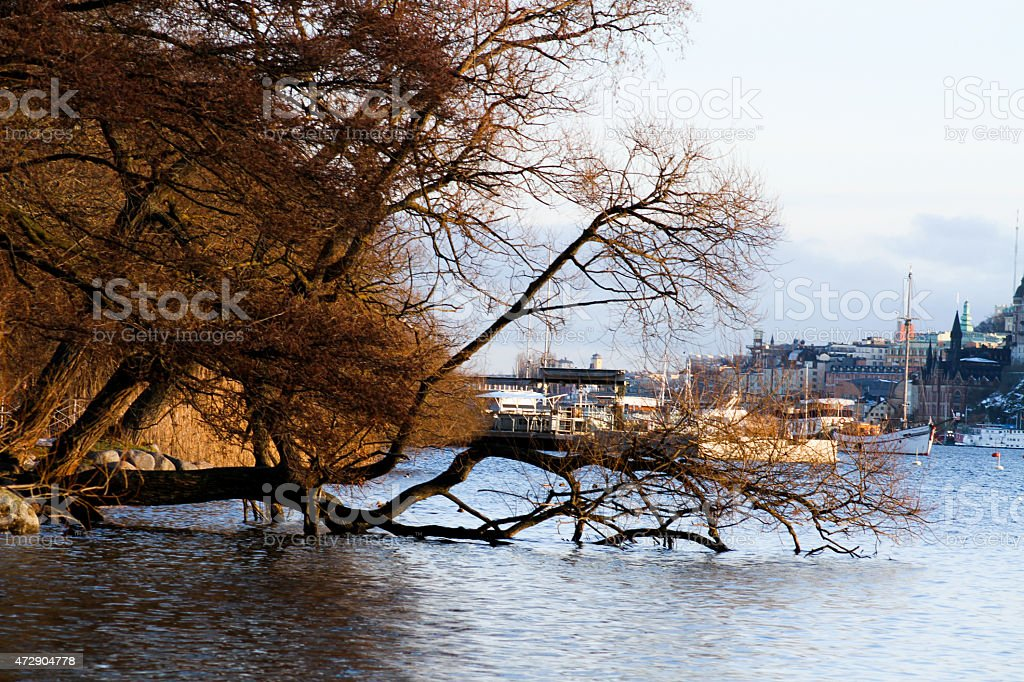 Seaside and trees by the water royalty-free stock photo
