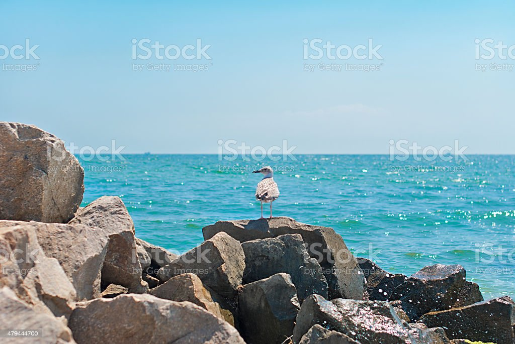 seaside cliffs and stone stock photo