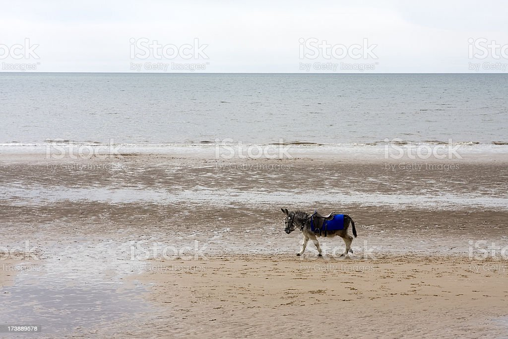Seaside donkey stock photo