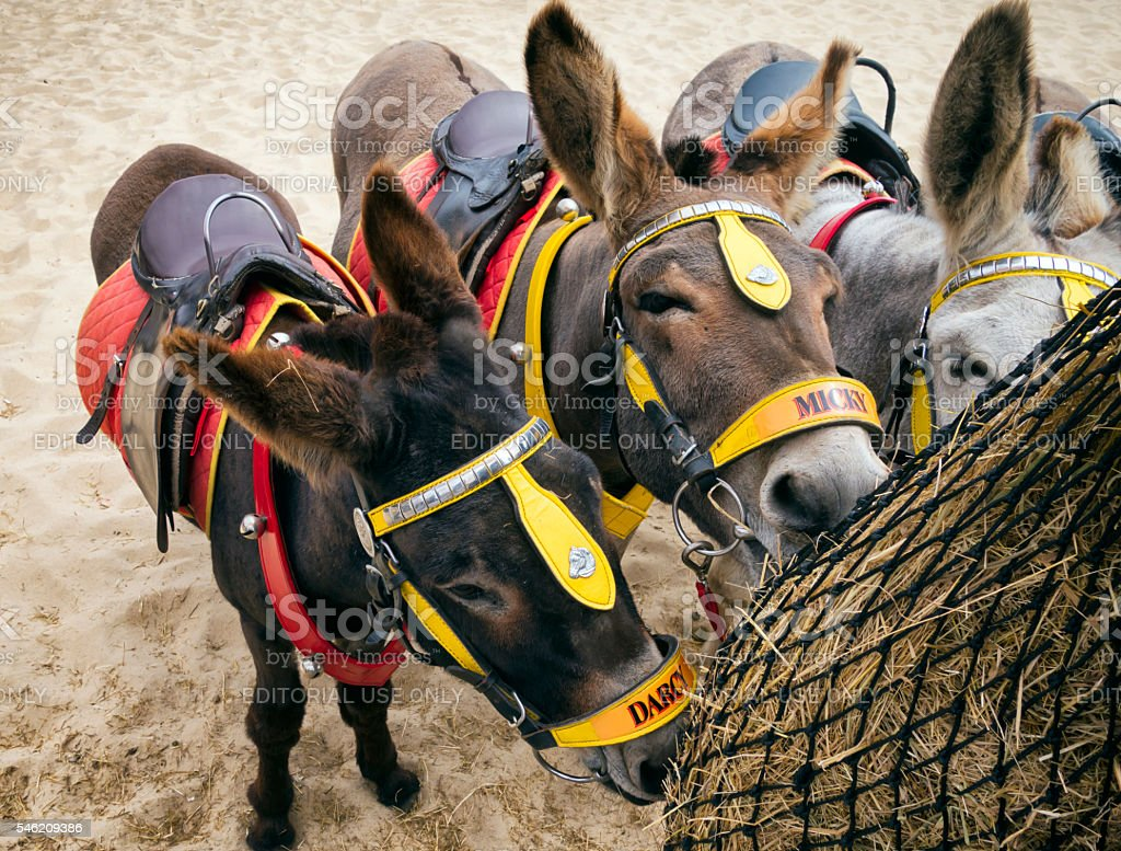 Seaside donkeys feeding stock photo