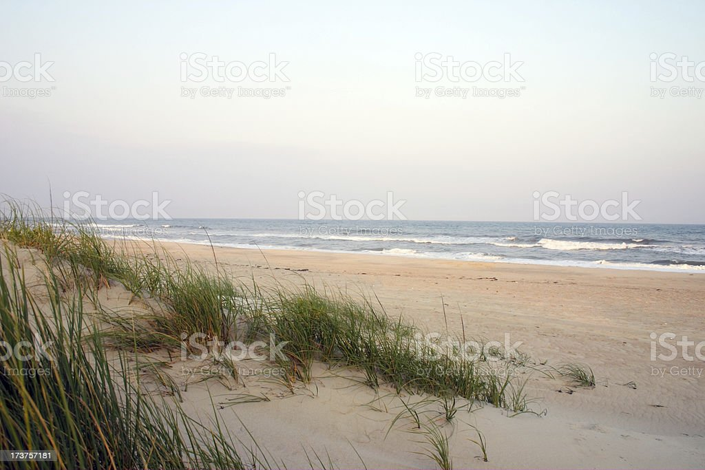 Seaside Grass stock photo