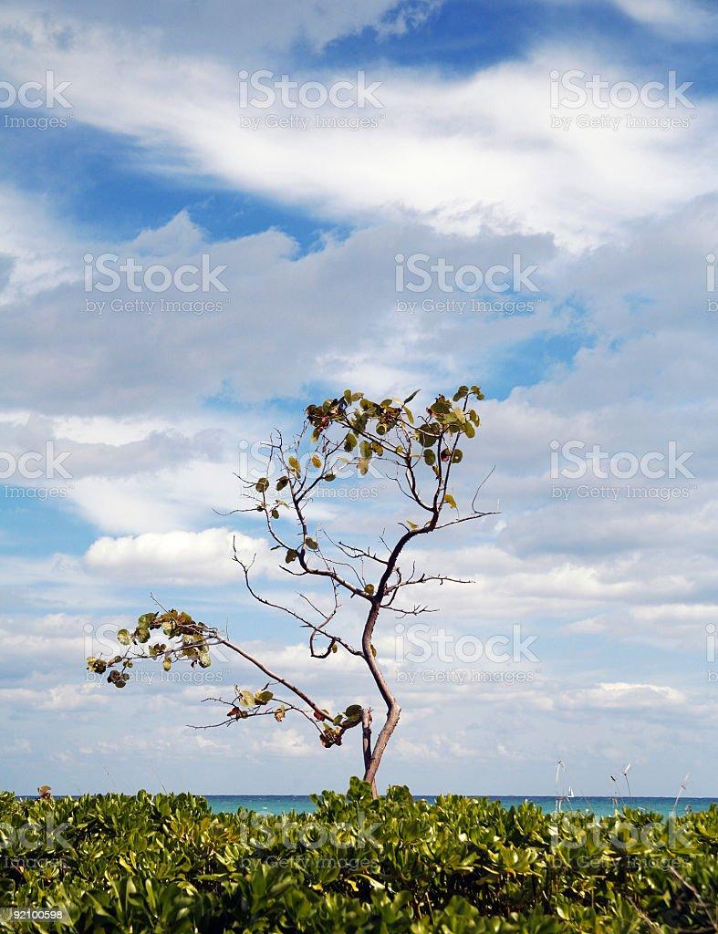 Seaside sentinel stock photo