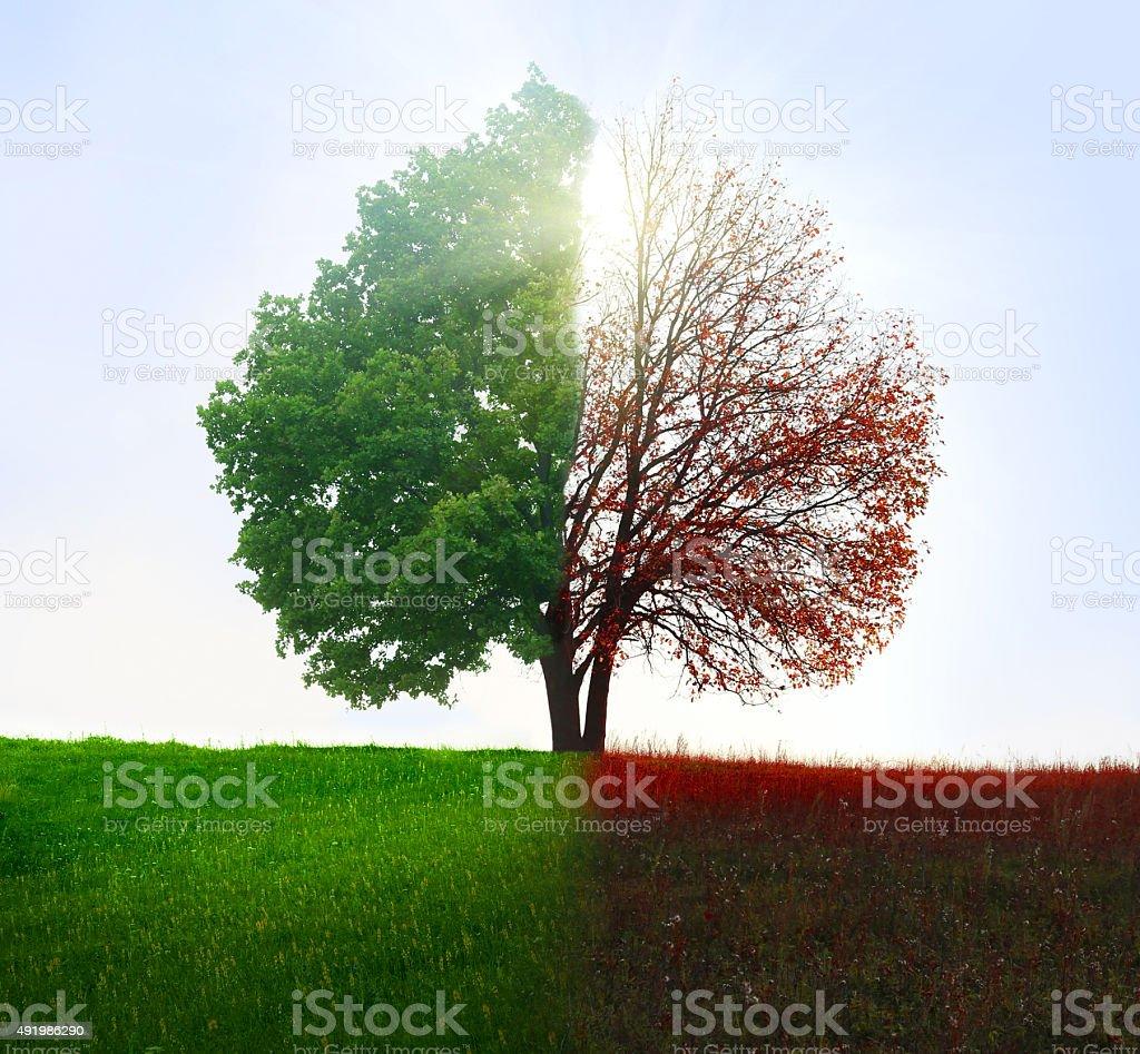 Season change. From summer to autumn. stock photo