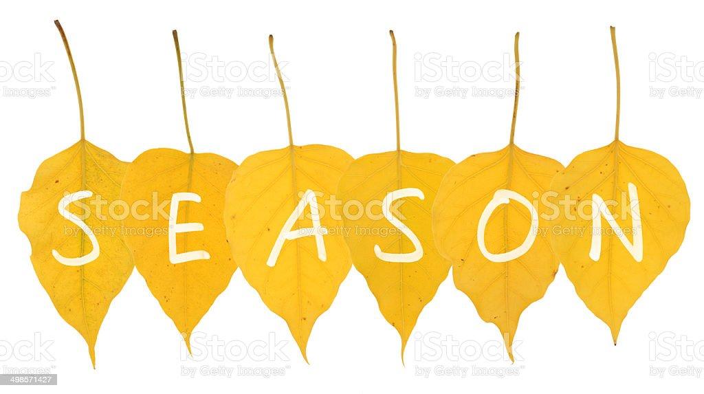 Season - Stock Image of Yellow Leaves on White royalty-free stock photo