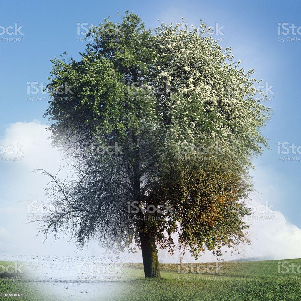 4 Season tree Composing royalty-free stock photo