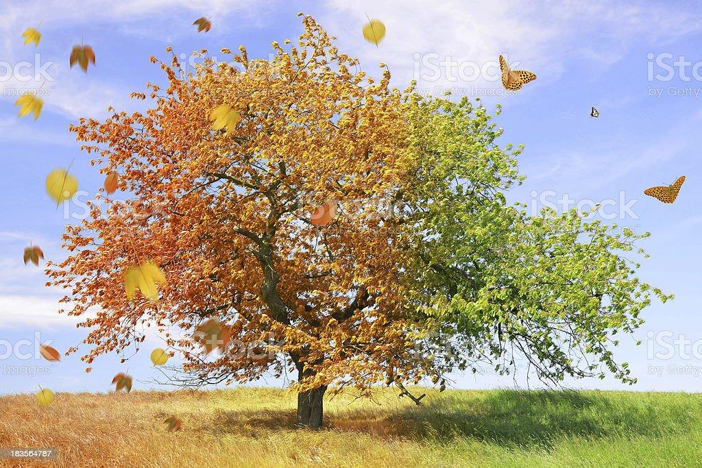 Season tree royalty-free stock photo