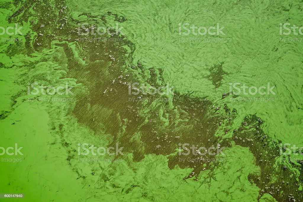 Seasonal algae bloom. Polluted river water stock photo