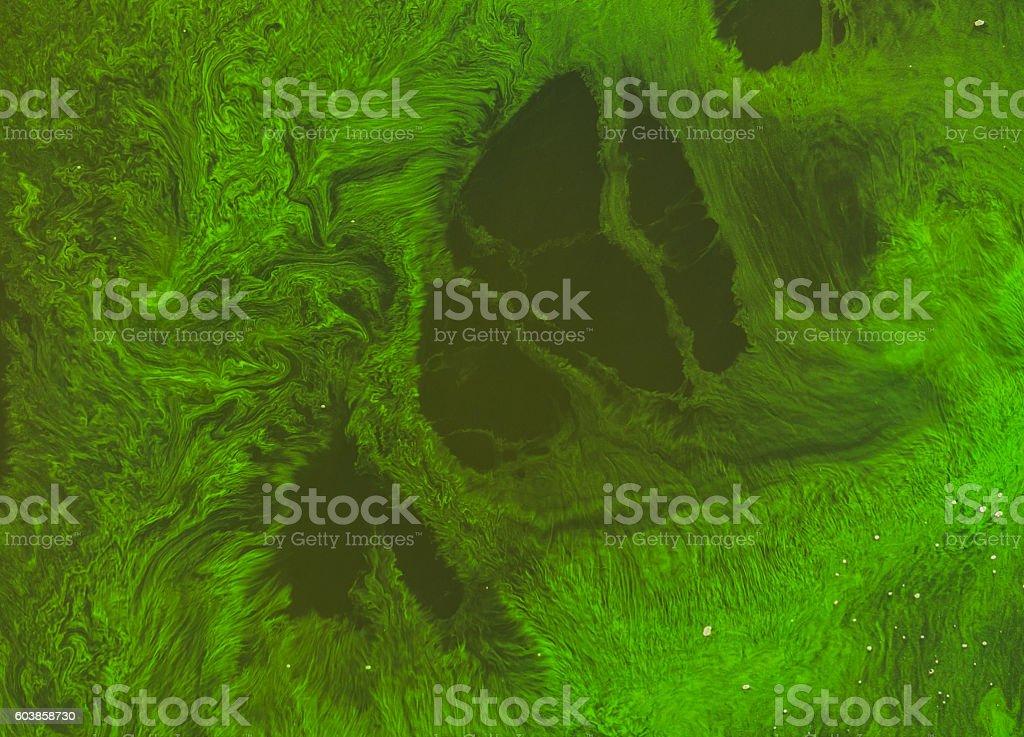 Seasonal algal blooms in the river stock photo