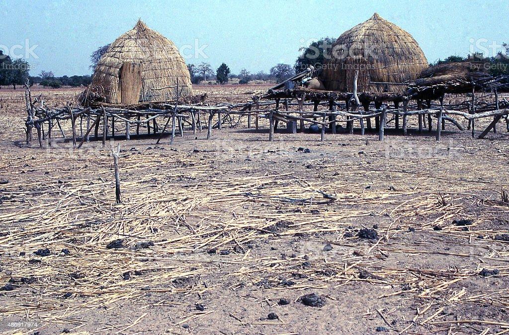Seasonal Fulani herders in farmer fields Sahel Burkina Faso Africa stock photo