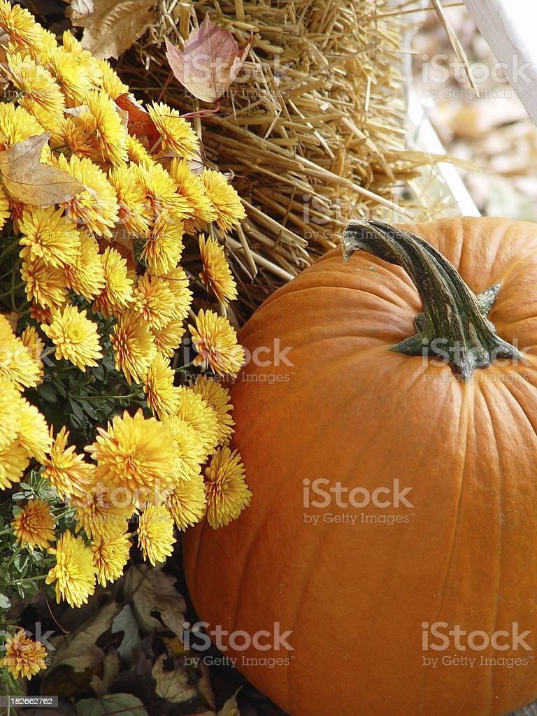 Seasonal  - Harvestfest stock photo