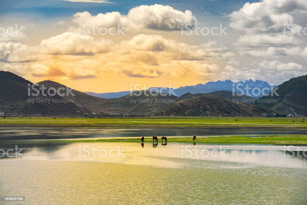 Seasonal lake covered with green grass and yellow hay stock photo