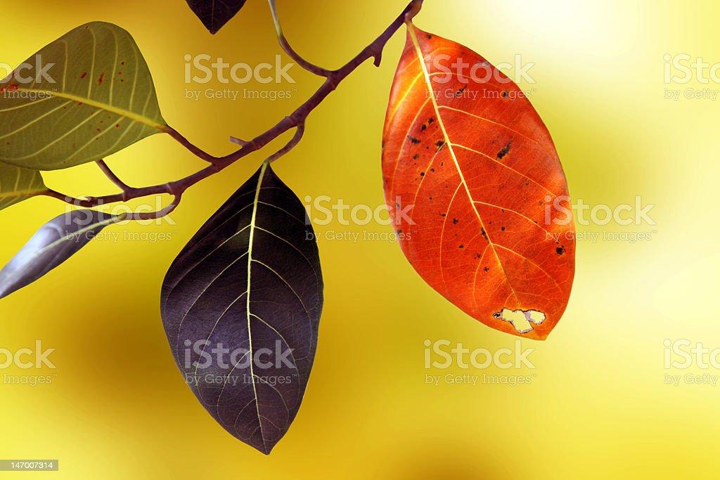 Saisonale Blätter Lizenzfreies stock-foto