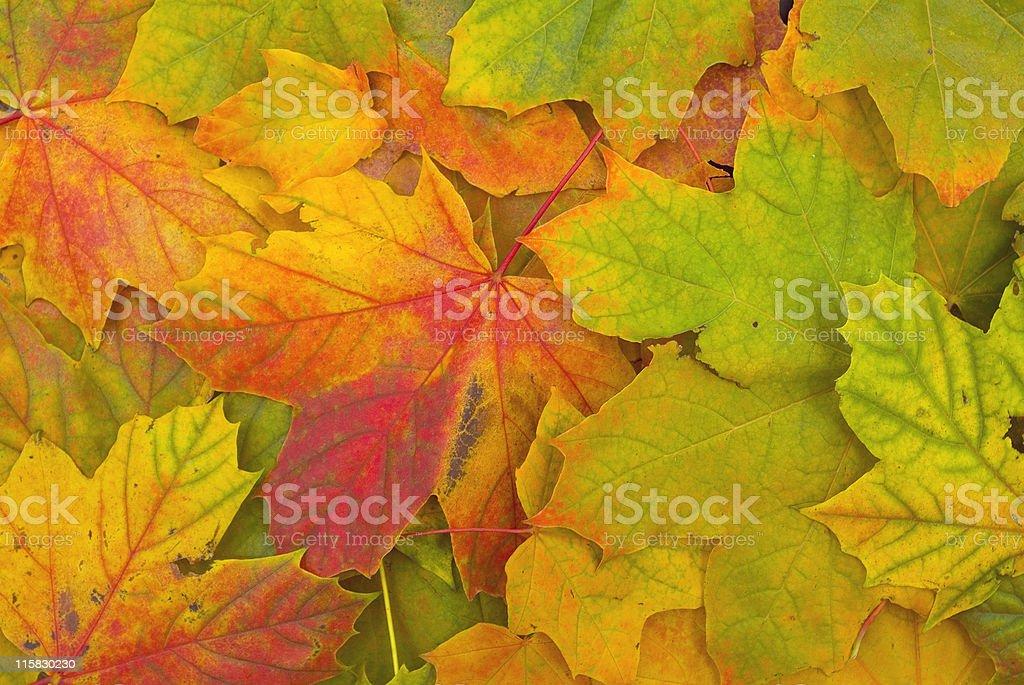 Seasons End stock photo