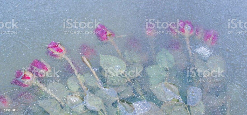 4 Seasons stock photo