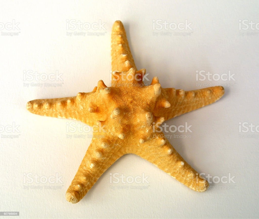 Seastar - 01 stock photo