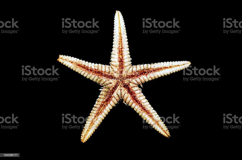 Sea-star endoskeleton stock photo