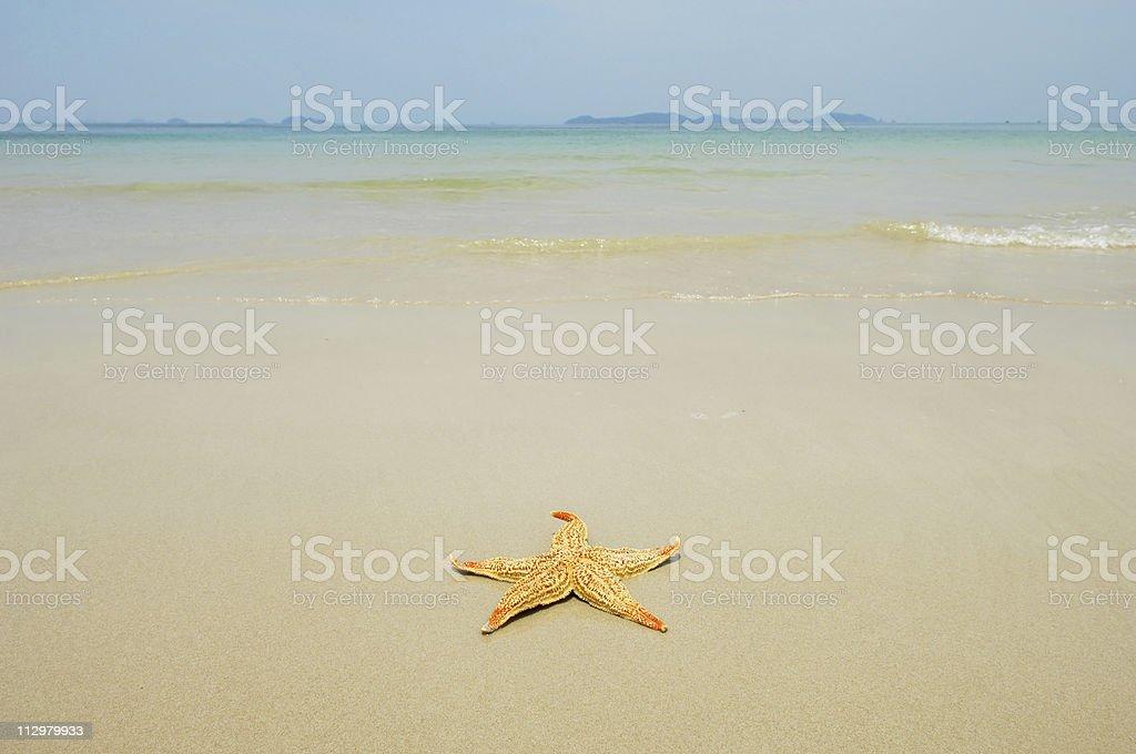 seastar royalty-free stock photo