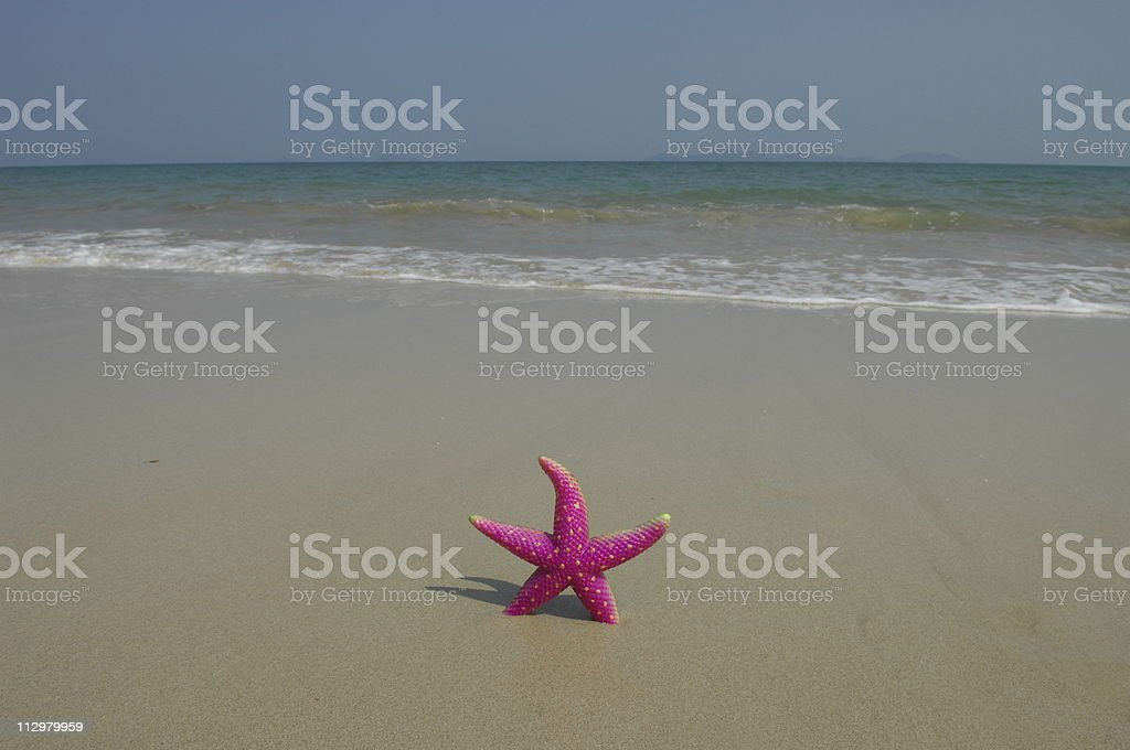 seastar royalty-free stock photo