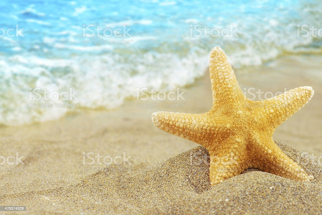 Seastar stock photo