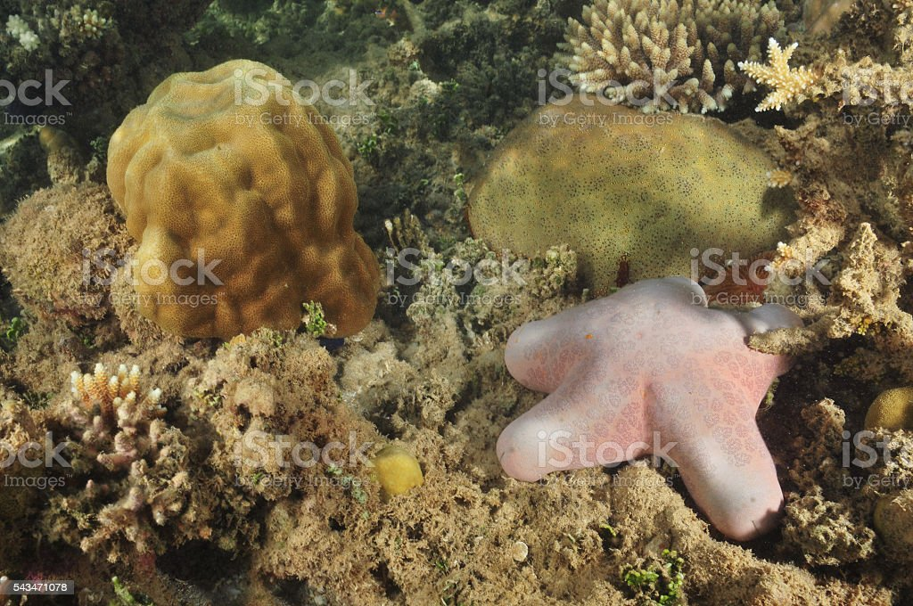 Seastars in coral sea stock photo