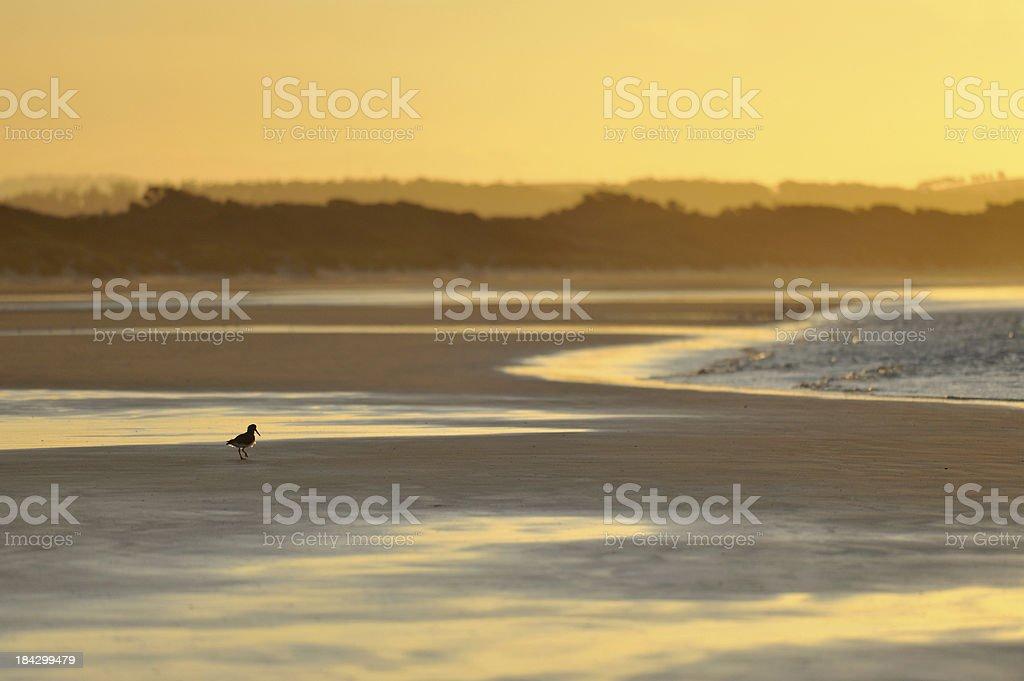Sea-Sunset, stock photo
