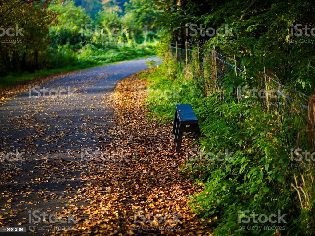 seat in forest stock photo