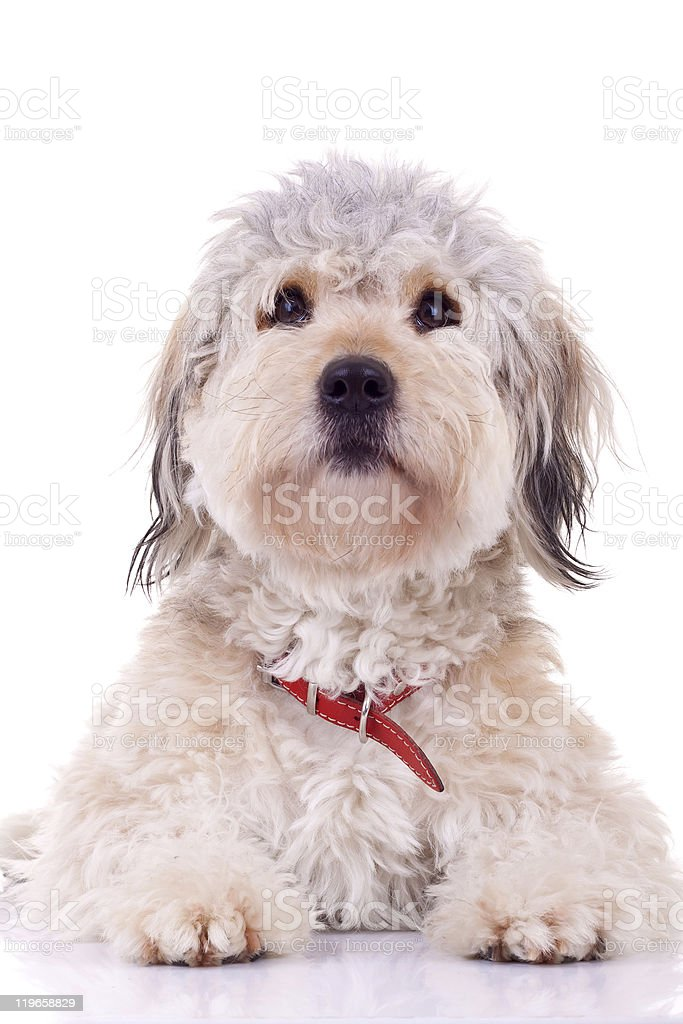 seated puppy stock photo