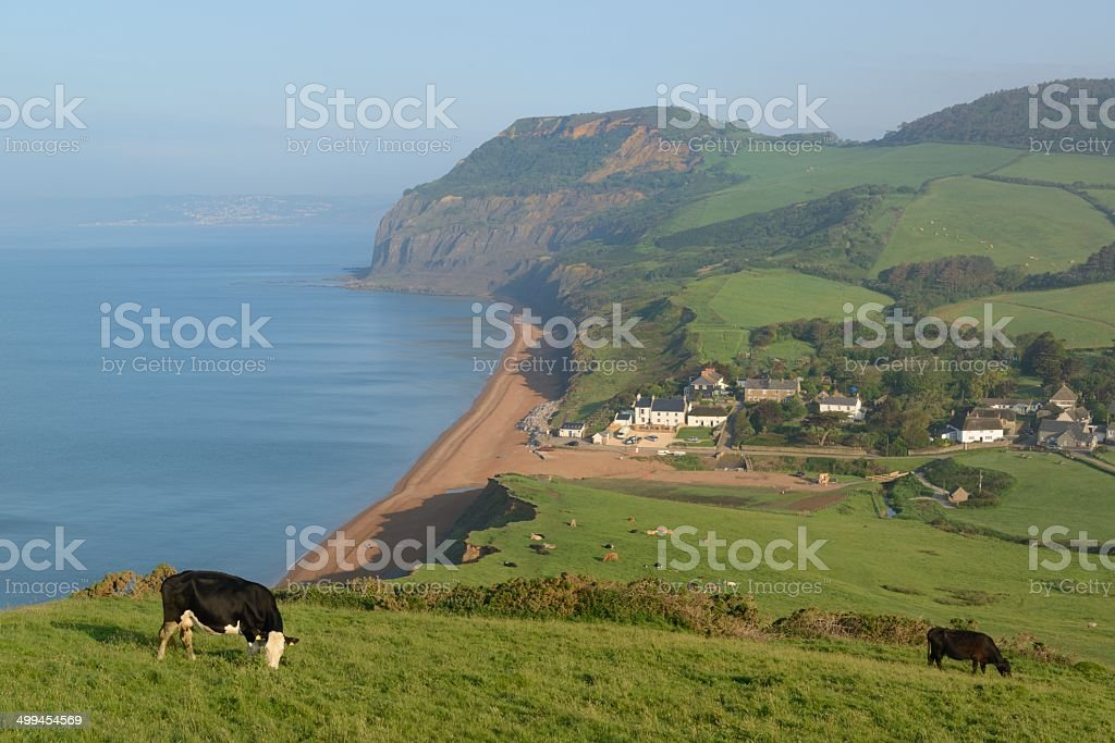 Seatown and cows stock photo