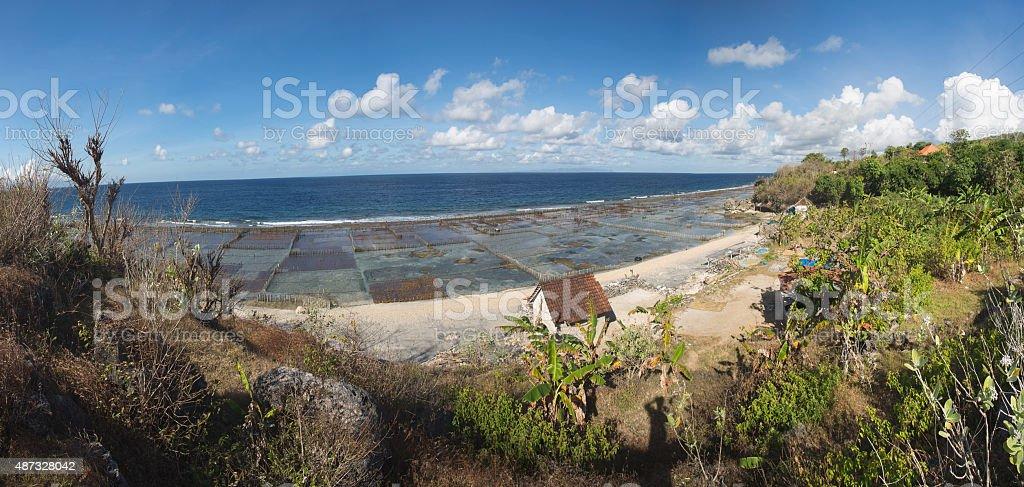 Seaweed algae stock photo