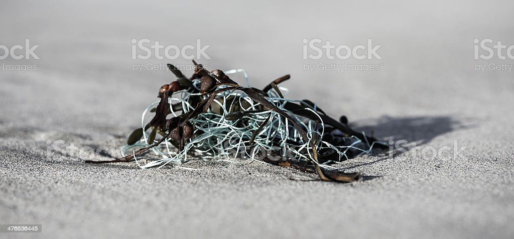 Seaweed and blue rope on sandy beach royalty-free stock photo