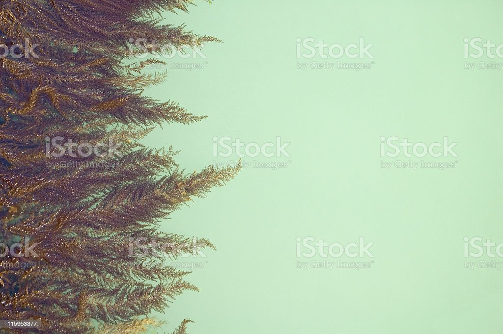 Seaweed and Green Copy Space royalty-free stock photo