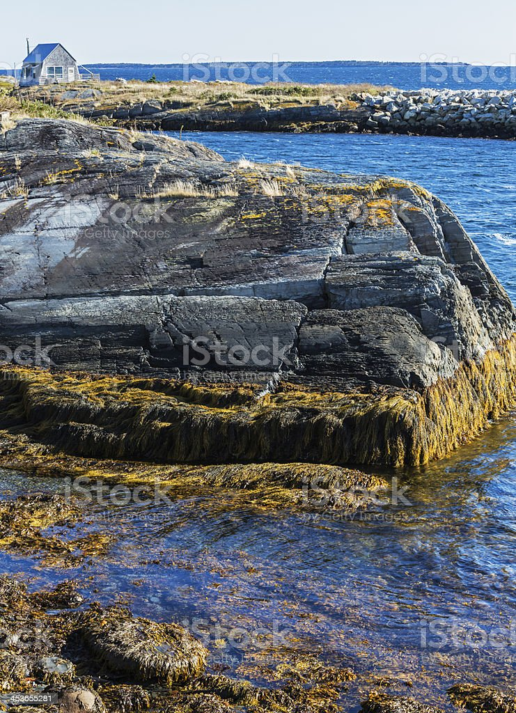 Seaweed And Summer Cottage on Rocky Nova Scotia Coastline royalty-free stock photo