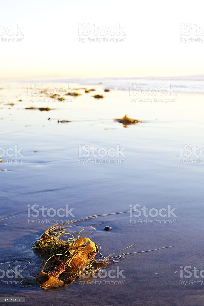 seaweed and sunset royalty-free stock photo