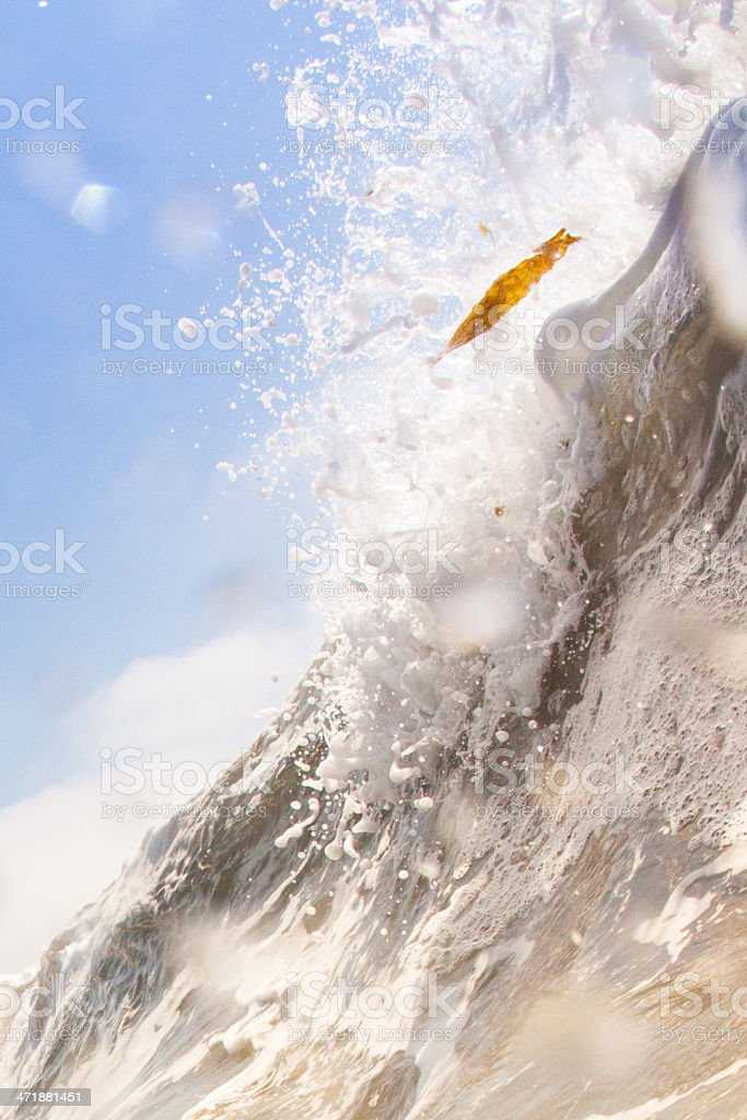 seaweed and wave royalty-free stock photo
