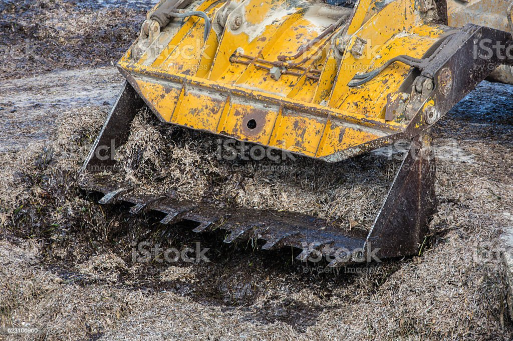 Seaweed bladderrack being cleared from the shoreline by machine stock photo