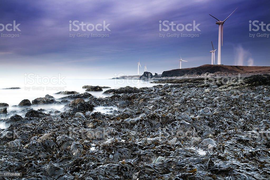 Seaweed Coastline royalty-free stock photo