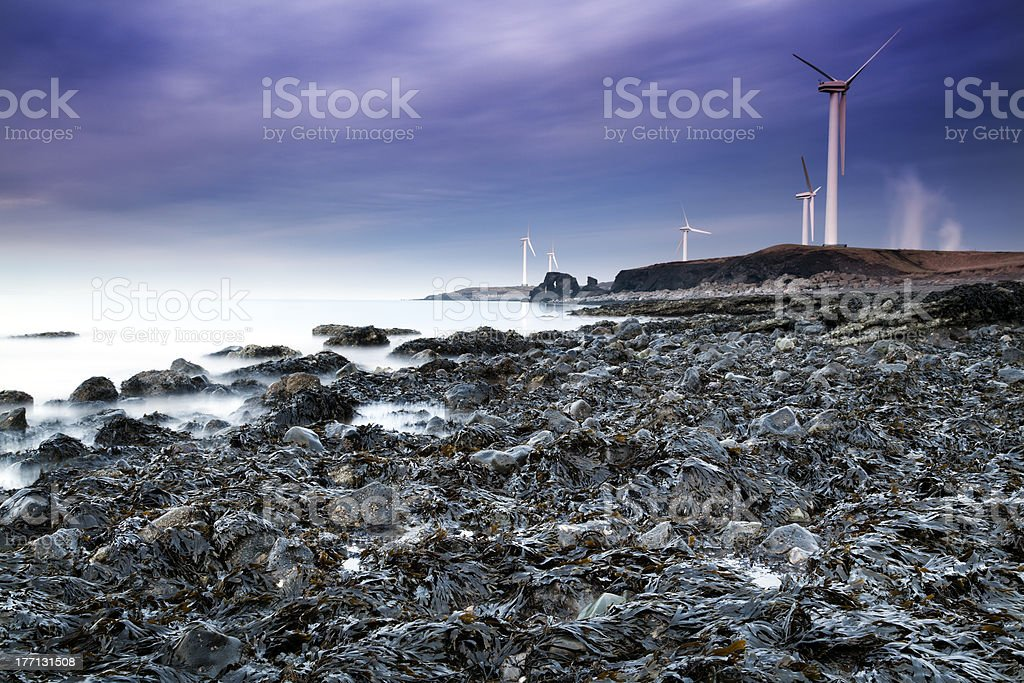 Seaweed Coastline stock photo