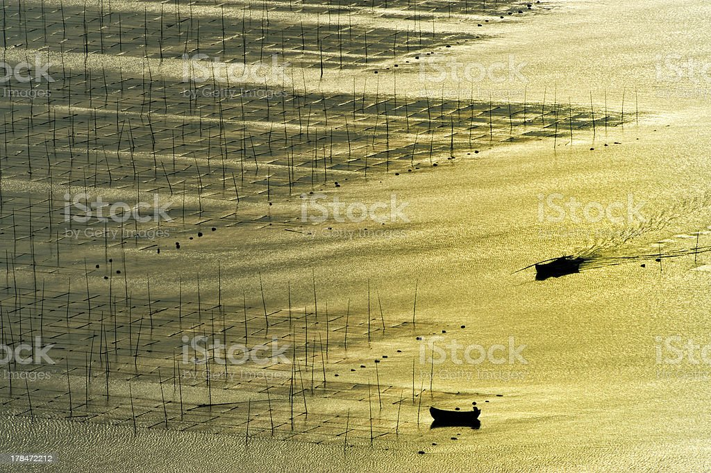 Seaweed farm royalty-free stock photo