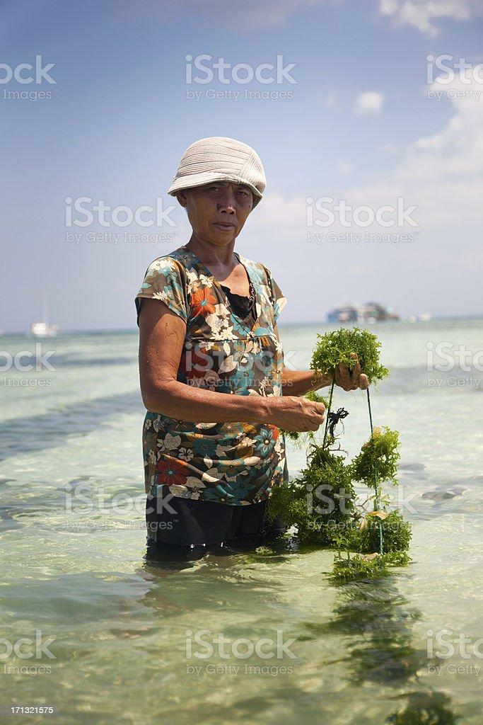 Seaweed Farmer royalty-free stock photo