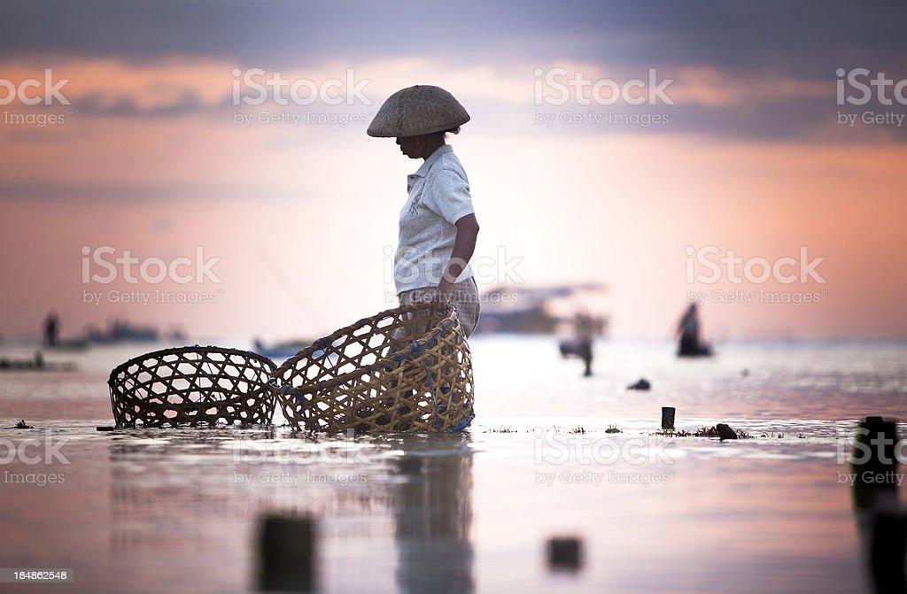 Seaweed Farmer stock photo