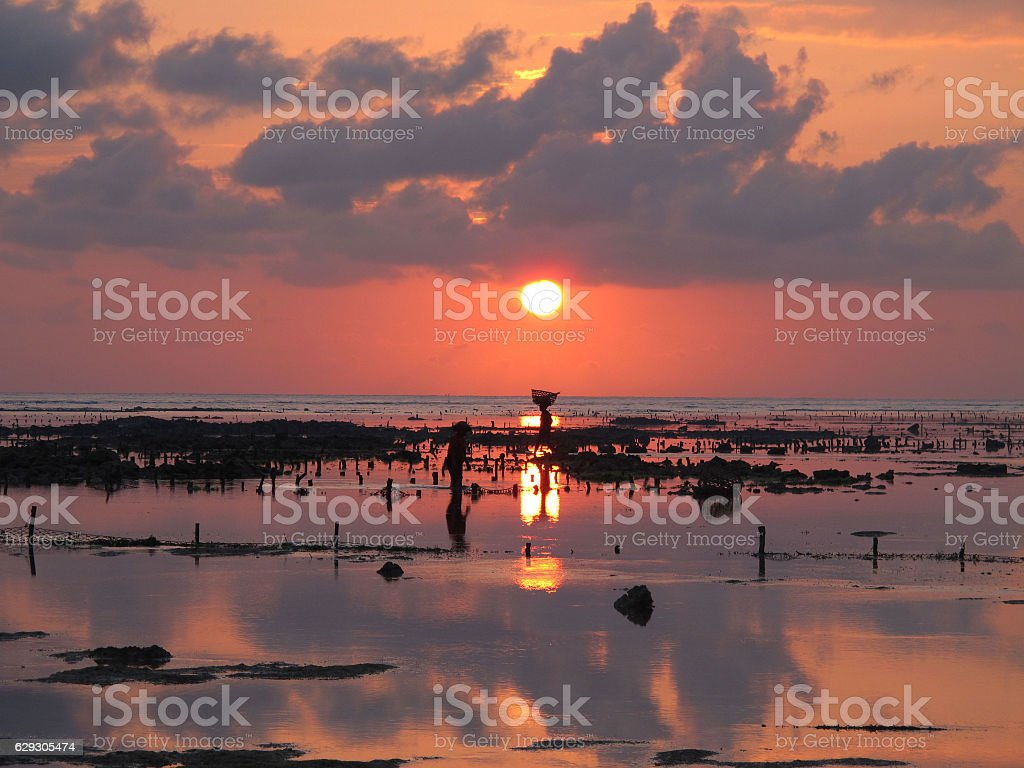 Seaweed farmers at Sunrise, Nusa Lembongan, Bali, Indonesia stock photo